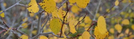 Fall Aspen Colorado