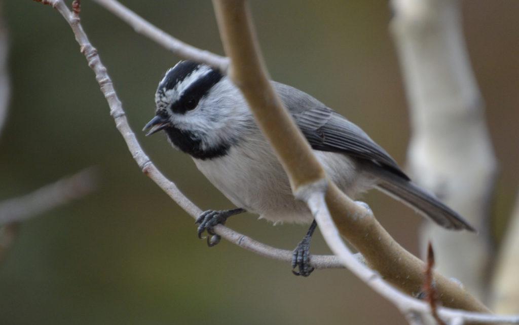 Colorado Bird Wildlife